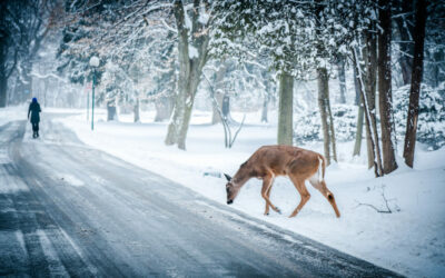 snow winter christmas deer 1024x576 1 338417 400x250 - News